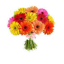 gerbera-bunch